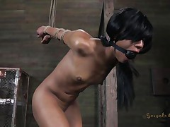 Isn't Nikki a fascinating beauty and sexy too? She's tied, blindfolded and face hole gagged with a ball. A big darksome male pumps her from behind and rips Nikki's fur pie before taking care of her mouth. His white buddy comes to aid him punish this slut and bonks her a-hole from behind also while the darksome one deep throats her